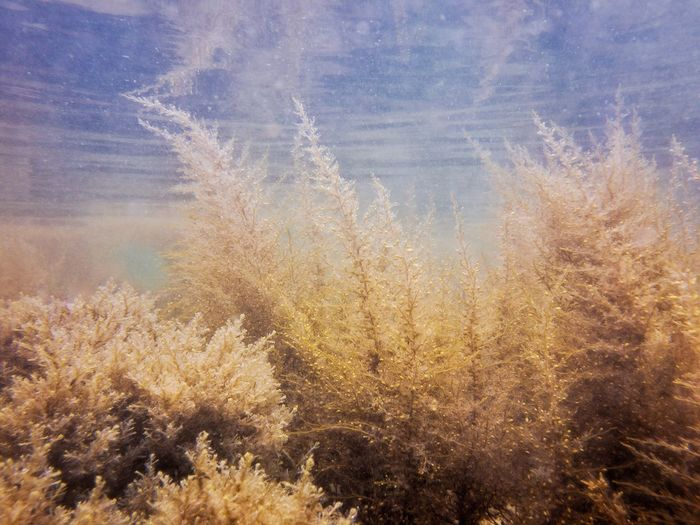 Algae Sea Underwater Underwater Landscape Nature Beauty In Nature Cold Temperature Plant No People Growth Tranquility Sky Day Scenics - Nature