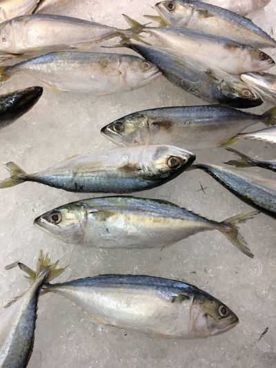High angle view of fishes for sale in market