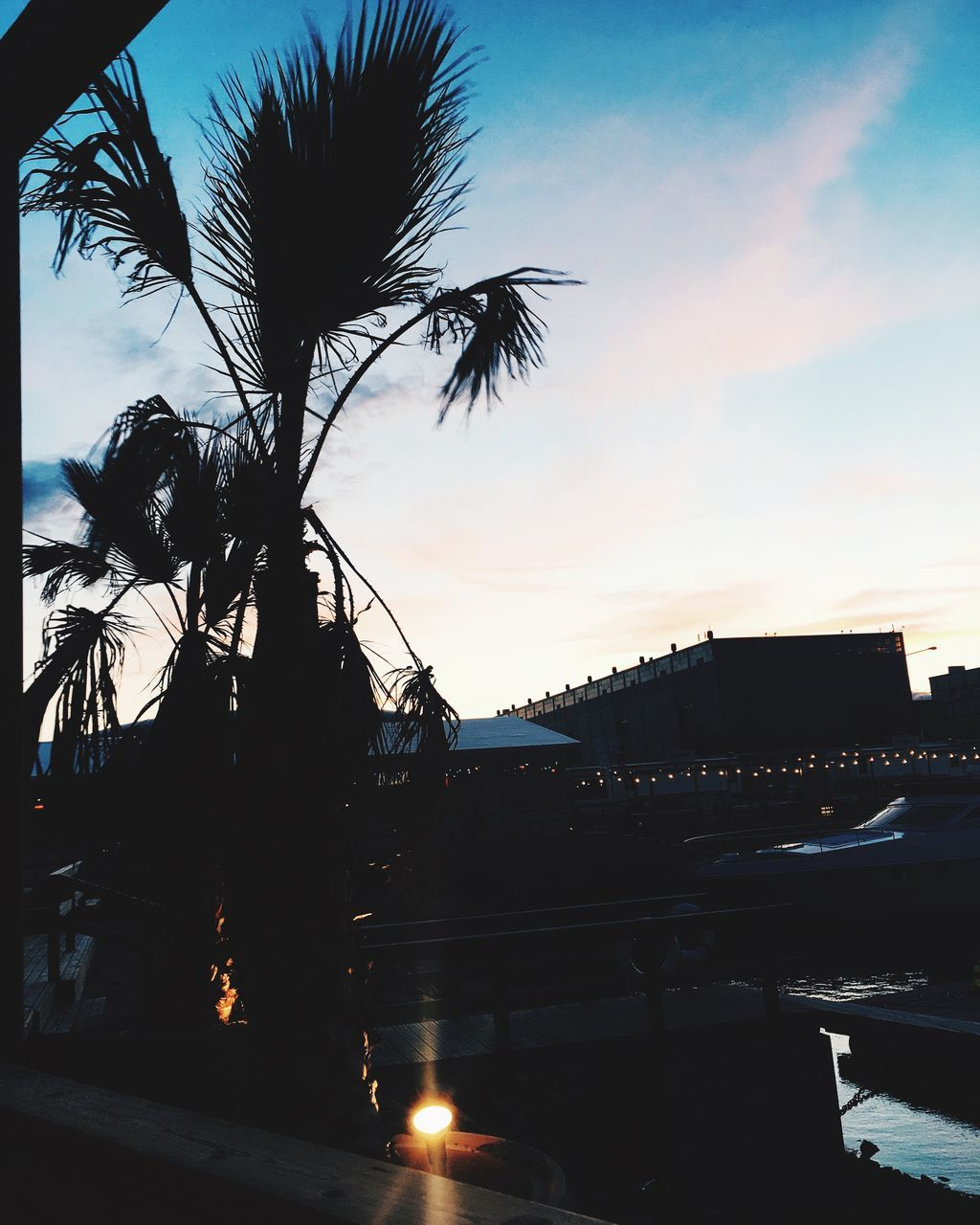 tree, sunset, sky, silhouette, built structure, palm tree, outdoors, architecture, sunlight, building exterior, no people, nature, clear sky, day, city, beauty in nature, water