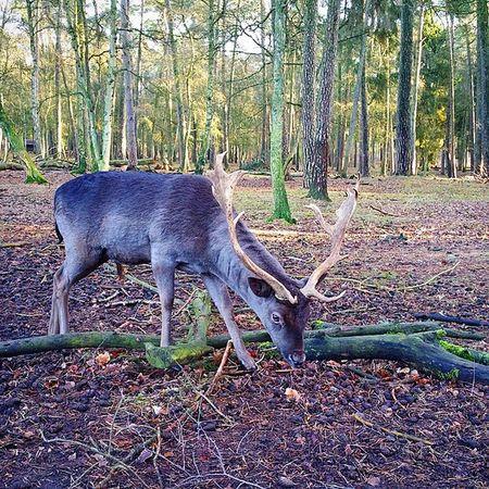 Going wild! Damwild Animal Natur Nature Tiere Wildpark Hamburg Klövensten
