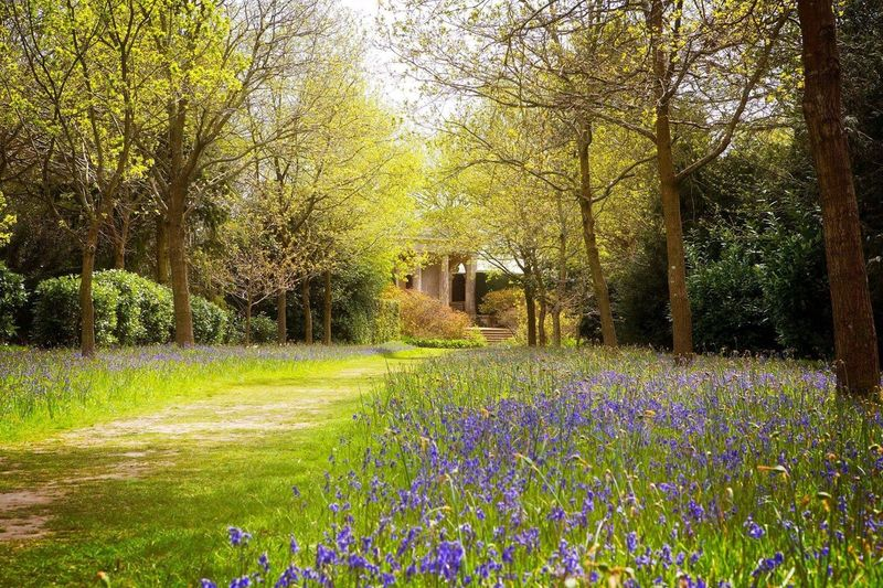 Outdoors Walk Historical Place Blickling Hall Green England National Trust Spring Bluebells
