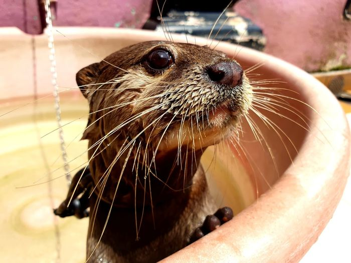 Otter Animals Water Pets Close-up Whisker Animal Nose Animal Face