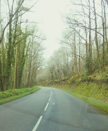 Road Tree The Way Forward Nature Transportation Outdoors Bare Tree Green Color Day Tranquil Scene No People Tranquility Forest Scenics Beauty In Nature Landscape Tree Trunk Growth Grass Sky