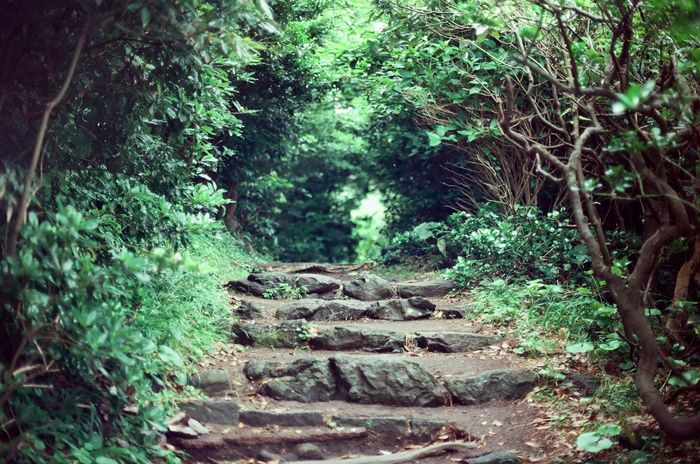 @film @green @Japan @travel @traveling Beauty In Nature Day Forest Green Color Growth Lush Foliage Nature No People Outdoors Plant Adapted To The City Staircase Stairs Steps Stone Stone Material The Way Forward Tranquil Scene Tranquility Tree