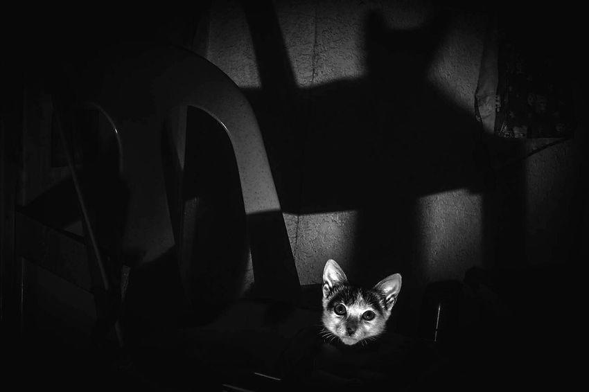 Taking Photos Blackandwhite Photography Capture The Moment Onelight creepycat