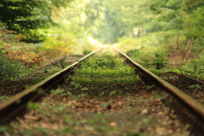 Railroad Track The Way Forward Nature Straight Parallel Close-up EyeEm Best Shots - Nature Nature Nature Photography Outdoors No Edit Railroad