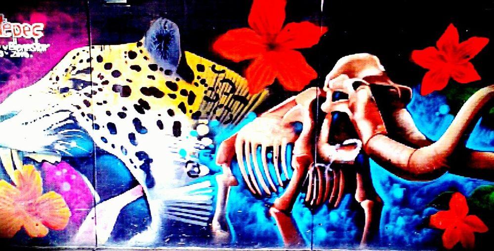 Graffiti Mural Art Ecatepec Nature Aninals Elefant Jaguars