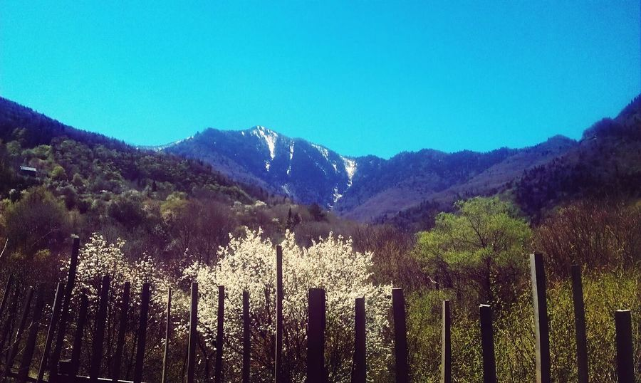 Eyem4phptography Spring Has Arrived Blossoms  Snowy Mountains