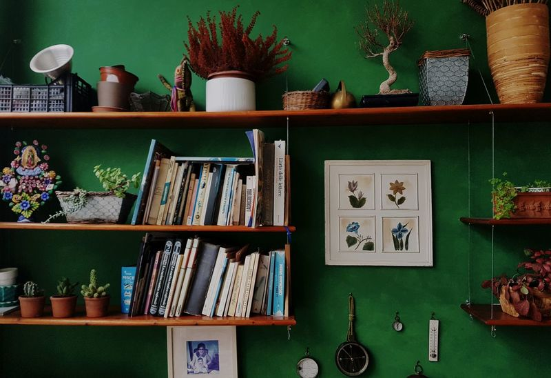 Quiet Moments Quiet Places Quiet Photo Book Books Room Room Decor Green Green Color Wall Cactus Chest Bonsai Colors Colorfull Morning Morning Light Calm Plant Shelf Compass Painting No People Non-urban Scene Nofilter Frame Shelves Shelves Of Books Disorder Italy Apúlia Solid Nofocus  No Focus Green Green Green!  Light Light And Shadow Shadows & Lights darkness and light EyeEmNewHere