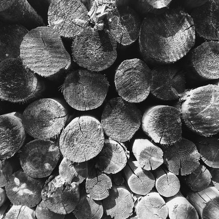 Nature Collection Wood Black And White Nature