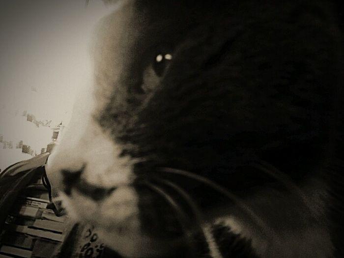 On guard.photo by Shell Sheddy Shellsheddyphotography Sheshephoto Maximum Closeness Cat♡ Cats 🐱 Bnw Guard Duty Cats Of EyeEm Natural Photography Animal Photography