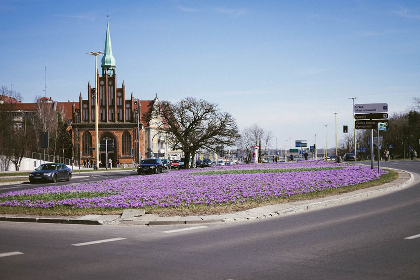 Szczecin blooming in the spring Poland Road Szczecin Architecture Blooming Building Building Exterior Built Structure Car City Clear Sky Day Flower Mode Of Transportation Nature No People Plant Sky Spring Street Transportation Tree