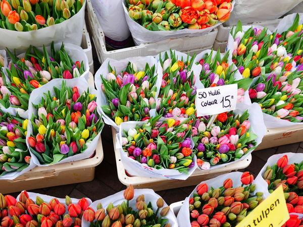 tulip bulbs Flower Head Flower Flower Market Multi Colored Price Tag Florist Business Choice Market Retail