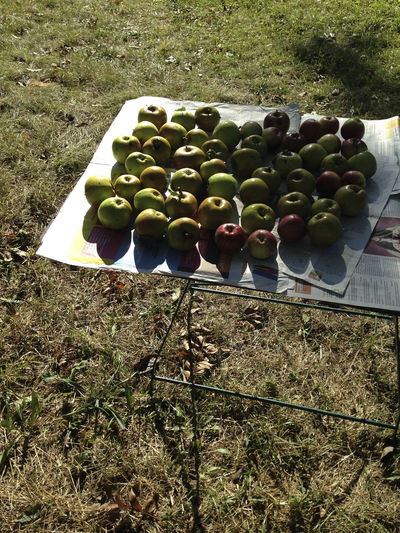 High angle view of fruits growing on field