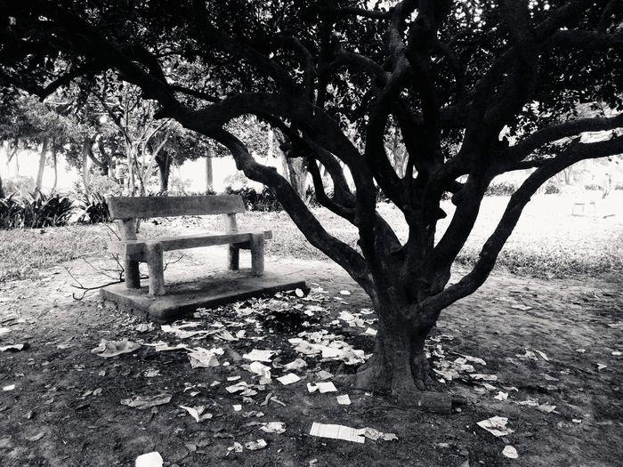 Black & White Tree Randomness Monochrome