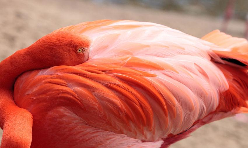 Close-up of bird resting on beach