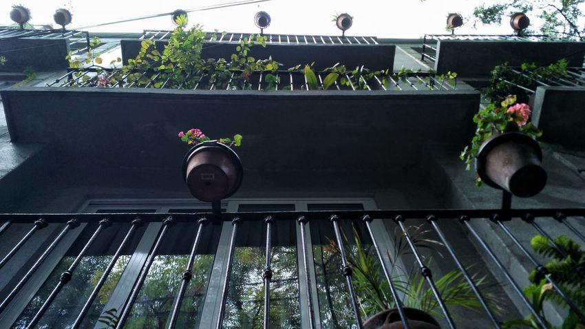 Balcony Plant Day No People Outdoors Growth Nature Freshness Sky Flower