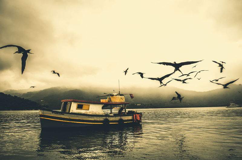 Brazil Series #14 Brazil Moment Sunset Silhouettes Animal Themes Animals In The Wild Beauty In Nature Bird Boat Day Flying Large Group Of Animals Nature No People Parati Rainforest River Riverbank Scenics Sky Spread Wings Sunset Transportation Vintage Wallpaper Water This Is Latin America