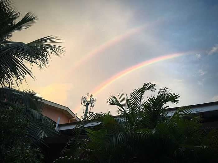 Outdoors Sky Beauty In Nature Rainbows Sky Clouds Palm Leaf rainbow