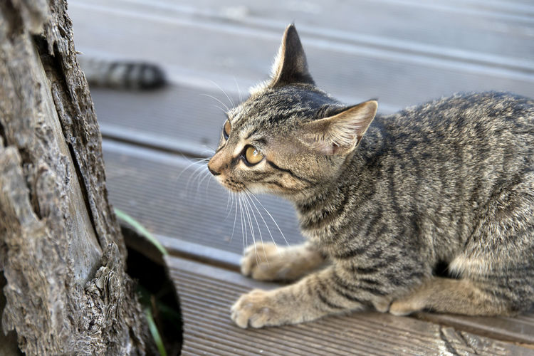 Close-up of kitten sitting outdoors