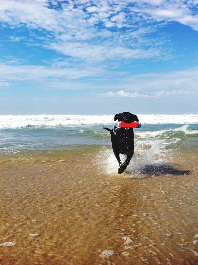 Dog running on water at beach against sky