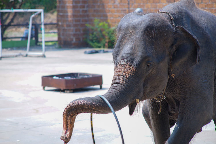 Close-up of elephant in zoo