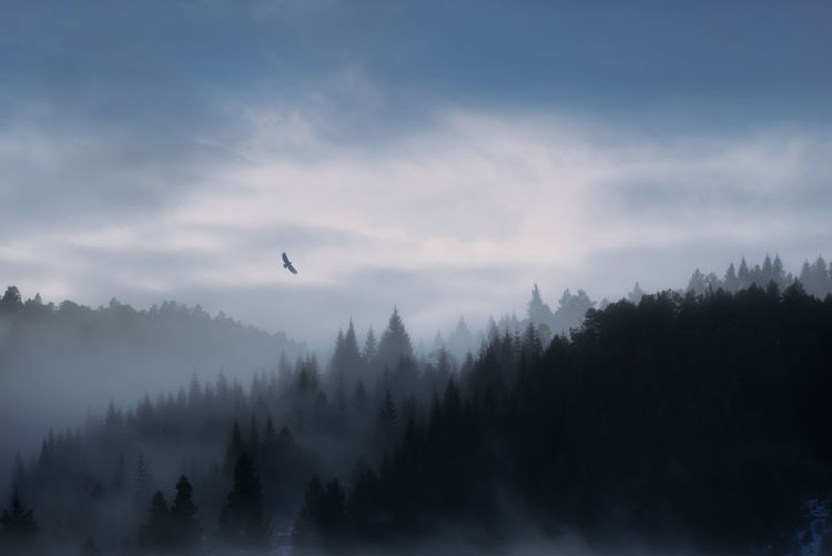 Moody forest in