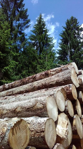 Abundance Day Firewood Forestry Industry Green Color Growth Heap Large Group Of Objects Log No People Outdoors Sky Stone - Object Timber Tranquil Scene Tree Weathered