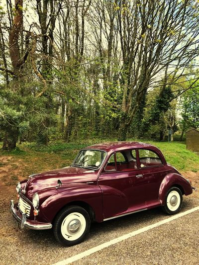 Morris Minor 1000 in Woodlands Tree Car Transportation Red Day Mode Of Transport Land Vehicle Outdoors Nature No People Sky