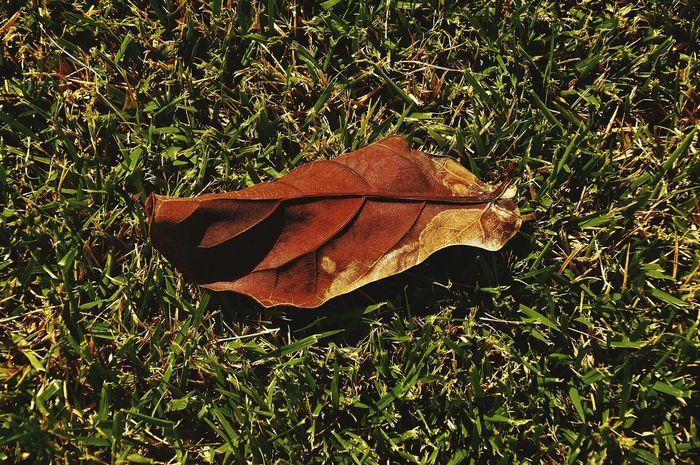 Folhas Que Caem Folhas Secas  EyeEm Nature Lover Nature Photography