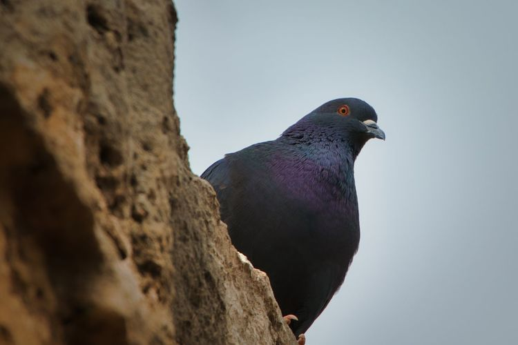 Low angle view of pigeon perching on wall