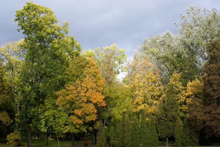 Shades of autumn Autumn Beauty In Nature Day Golden Autumn Nature Outdoors Tree