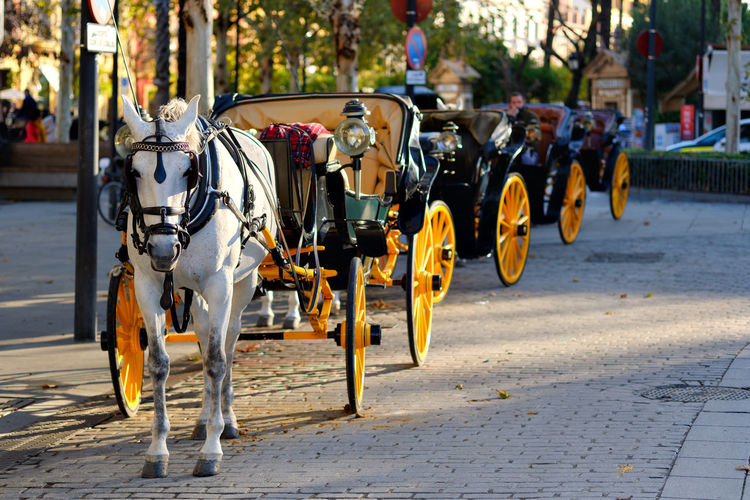View of horse cart on street in city