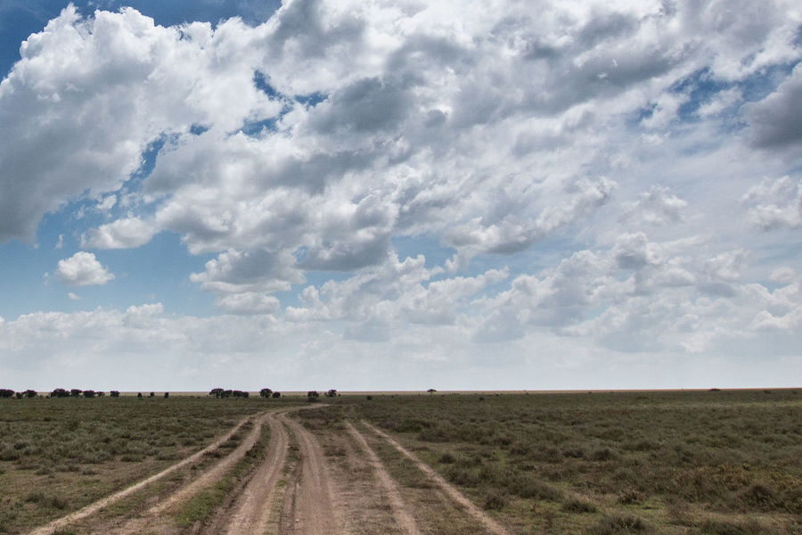 Africa African Beauty Cloud - Sky Day Empty Places Empty Road Field Landscape Lonely Road Nature Ngorongoro Crater No People Outdoors Rural Scene Safari Serengeti Serengeti National Park Sky Tanzania
