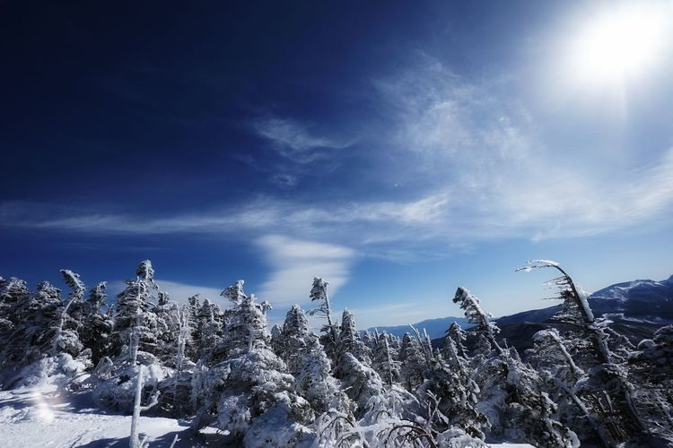Mountain Peak Trekkinng Mountain Range Mountain View Cold Temperature Nature Sky Winter Snow Tree Blue Outdoors Cloud - Sky Mountain