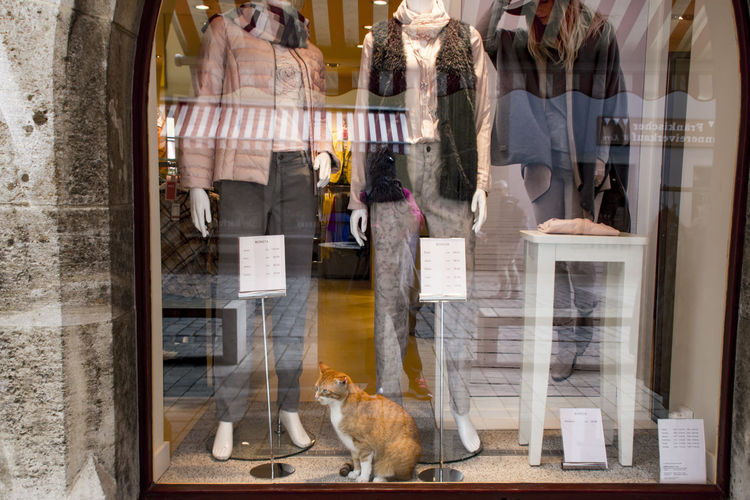 The Street Photographer - 2018 EyeEm Awards Animal Animal Themes Consumerism Day Domestic Domestic Animals Glass Glass - Material Mammal No People One Animal Pets Reflection Retail  Retail Display Shopping Sitting Store Store Window Transparent Vertebrate Window