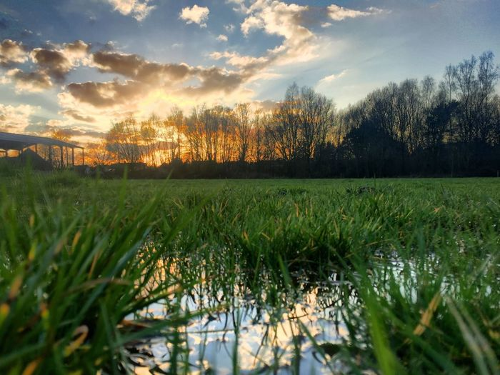 Colorful and dramatic sunset reflected in the water of a puddle in the meadows Plant Sky Growth Cloud - Sky Beauty In Nature Tranquility Tranquil Scene Sunset Scenics - Nature Grass Water Nature Tree Land Field Green Color Landscape No People Environment Outdoors