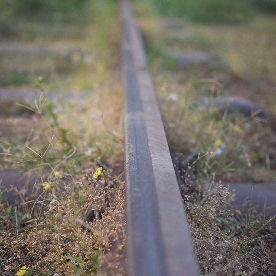 Railroad Railway Track Kalka Shimla Himachal Historic Toy_train Macro Photogrphy Nikon 35mm Grass Closeup