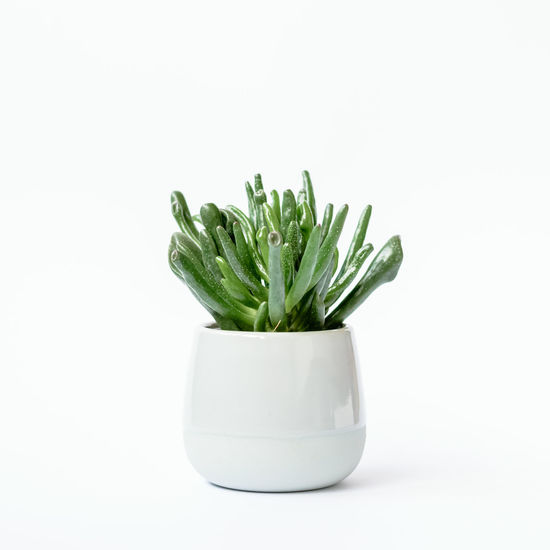 Gardening Green Thumb Plant Plants Succulents Urban Gardening Clay Pot Claypot Freshness Green Color Greenery House Plant Indoor Gardening Indoor Plants Indoors  No People Plants Collection Pot Potted Plant Studio Shot Succulent Love Succulent Plant Urban Greenery White Background