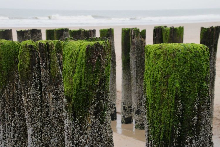 growth nature in a row beauty in nature tranquility green color no people sea plant sand & sea naturelovers Foreground Background beach Breakwater Breakwater Beach Water Netherlands Domburg
