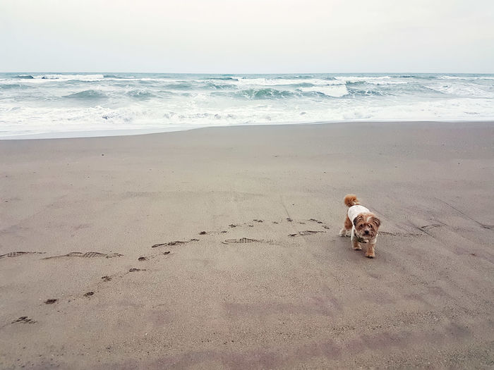 Best friend walk Nopeople Sand Beach Wintertime Waves Nature Bestfriend Pets Dog Scenics Beautiful Love Beach Sand Sea Dog Pets Horizon Over Water Vacations Outdoors Day Domestic Animals Landscape Sky Nature Animal Themes Full Length
