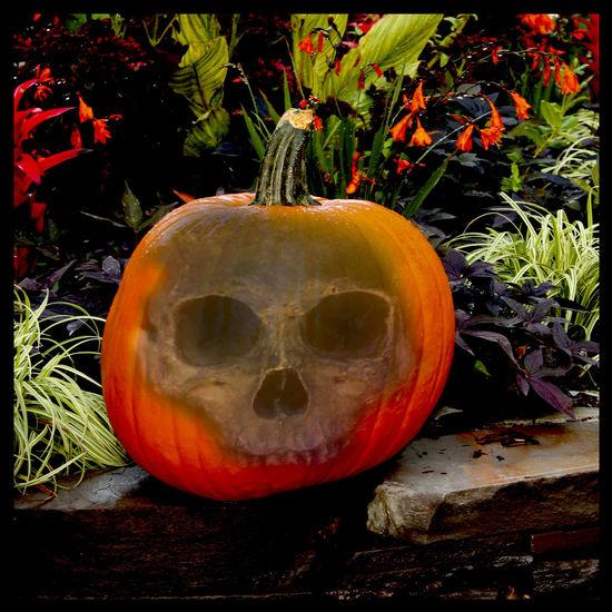 Close-up Day Jack O Lantern No People Pumpkin Skull
