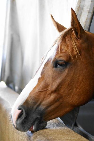 Animal Austria Beautiful Horse Beautiful Horses Brown Horse Horse Horse Life Horses