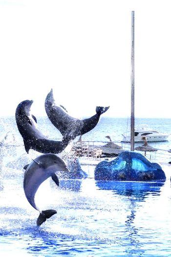 Mallorca❤️ Mallorca Marineland Delfin Delfines  Delfino DolphinShow Dolphins