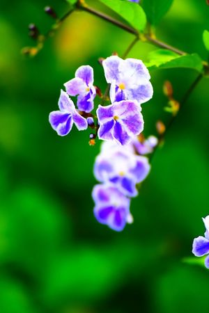 Beauty In Nature Close-up Day Flower Flower Head Flowering Plant Fragility Freshness Growth Inflorescence Leaf Lilac Nature No People Outdoors Petal Plant Plant Part Purple Selective Focus Vulnerability