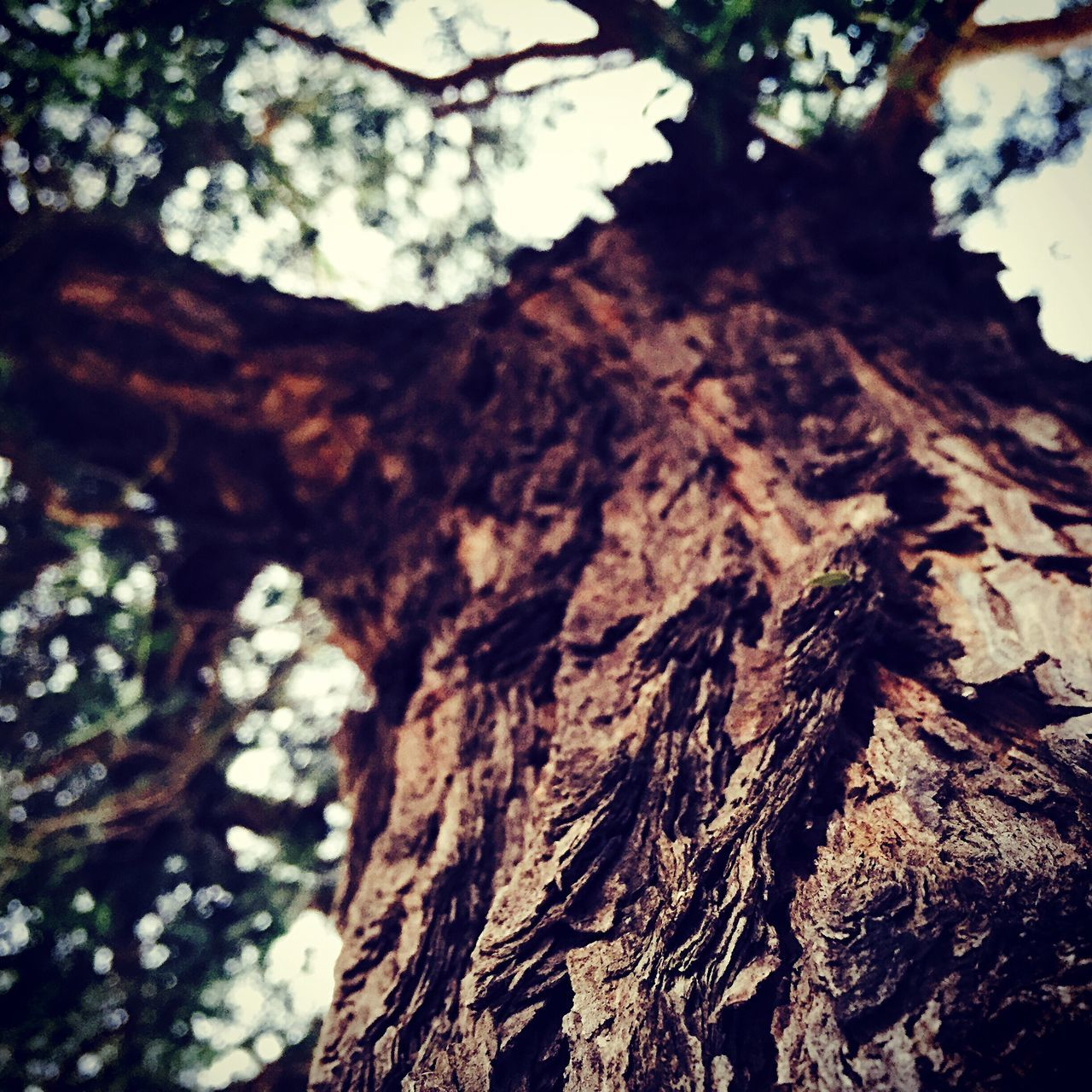 tree trunk, tree, nature, no people, close-up, bark, textured, day, outdoors, growth, beauty in nature