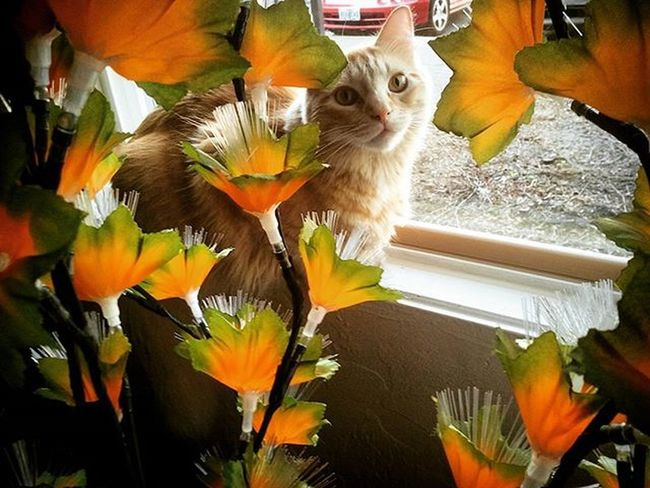 Stopeattingthefiberopticflowers Mrlito Neverlistens Gingercat