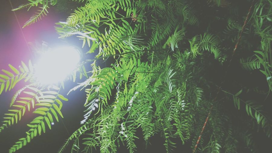 @vkamey Ig Light Lamp Tree Night Lighting Plants 🌱 Taqueria Green Hojas Leafs 🍃 Leafs Hojas Verdes, Darkness And Light