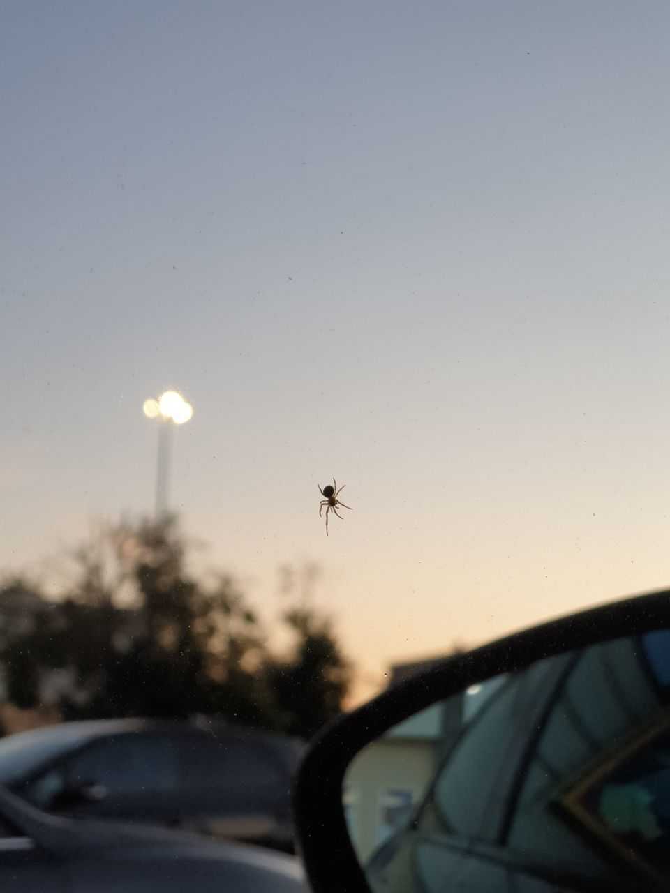 INSECT ON GLASS WINDOW