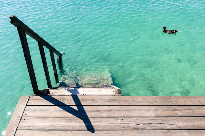 High angle view of coot swimming in sea seen from pier
